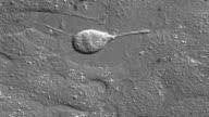 Zellteilung in Kultivierte Zelle.