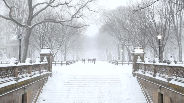 Central Park Winter in New York City
