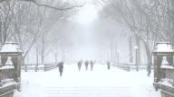 Central Park Winter Scenery New York City