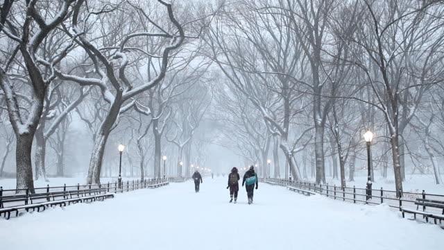 Central Park Winter Snowfall in New York City