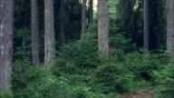 Fröhliche bärtigen touristischen Spaziergang im Pinienwald