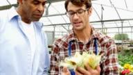 Fröhlich-Garten-Center-Mitarbeiter hilft Kunden-Shop für Mais