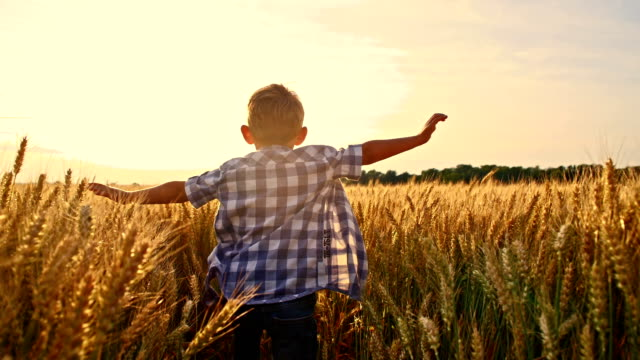 SLO MO Cheerful kid running in wheat field