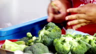 Chef prepares broccoli