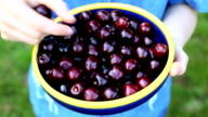 Cherries fruit female women bowl fresh food hands vitamin diet