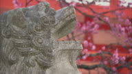 CU R/F Cherry blossom and detail of stone lion at Kiyomizu-dera temple, Kyoto, Japan
