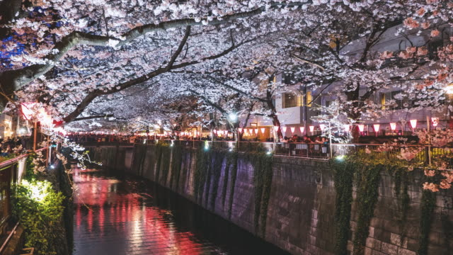 Cherry Blossom at Meguro River Time Lapse