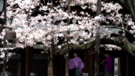 Cherry blossoms are now at their best in central Tokyo the Japan Meteorological Agency announced April 2 Japan which is good news for 'hanami'...