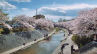 WS, Cherry blossoms by the Yamazaki river, people sunbathing