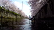 Cherry blossoms have reached their picturesque peak along the Megurogawa river one of the most popular sakura sightseeing spots in TokyoVideo was...