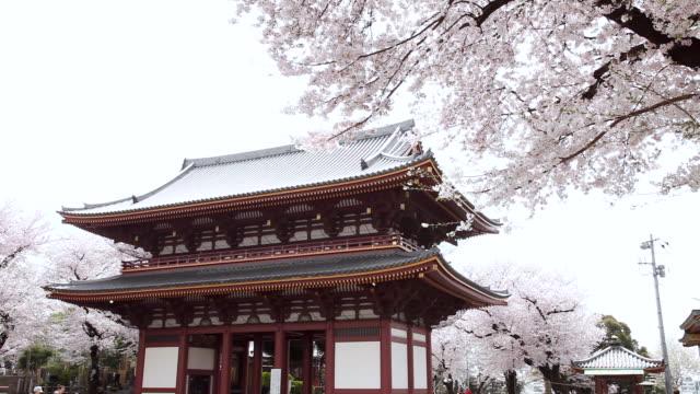 MS Cherry blossoms infront of Ikegami Honmon-ji temple / Ota, Tokyo, Japan
