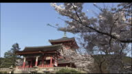 Cherry blossoms of Kiyomizu Temple