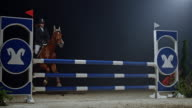 SLO MO Chestnut horse and rider jumping over obstacle