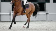 SLO MO DS Chestnut horse running in arena with rider
