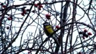 Chickadee