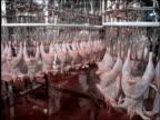 Chicken carcasses moving on conveyor racks / Brazil