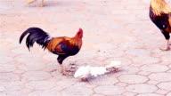 Chicken eat Rice
