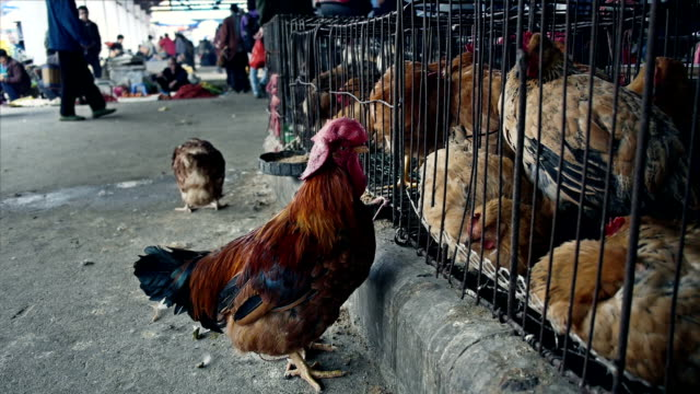 Chicken for sale at the market in China