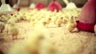 Chicks...