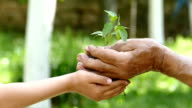 Child give to old man a soil with young plant-slowmotion