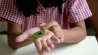 Child looking at pupa on her hand
