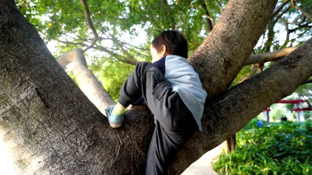 Kind auf einem Baum