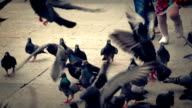 Children and Pigeons