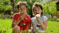 Children are having fun while blowing dandelion