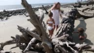 children exploring driftwood beach