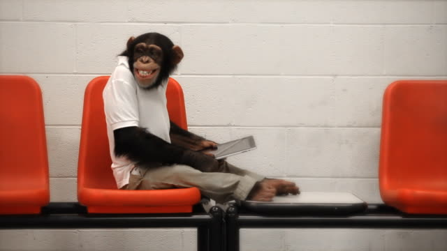 Chimp Casual Wi-Fi