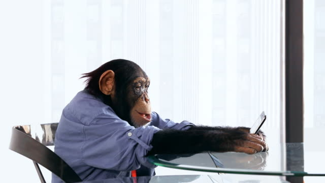Chimp Cellphone