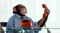 Chimp Costumer Service