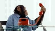 Chimp Help Line