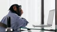 Chimp Laptop Browsing