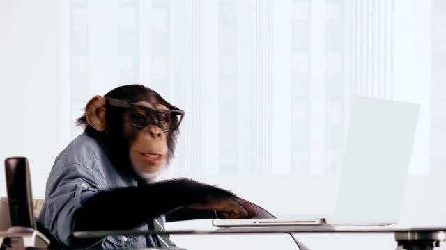 Chimp Laptop Happy