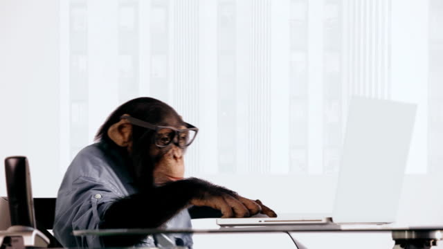 Chimp Laptop Serious