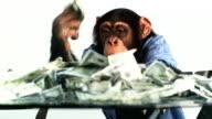Chimp Money Excited