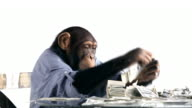 Chimp Money Saving