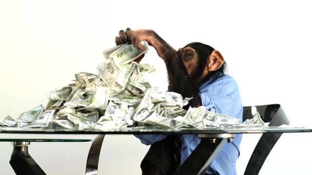 Chimp Money Stacking