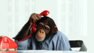 Chimp Phone Problems