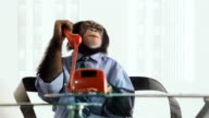 Chimp Phone Talking