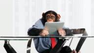 Chimp Tablet Happy