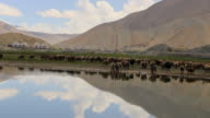 China, Pamir plateau, view of sheep in the Karakul lake (3,600 m)near the Karakoram highway