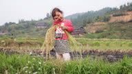 Chinese girl playing with rice during harvest waving hand