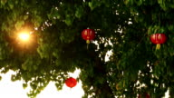 Chinese lanterns on tree with sunbeam