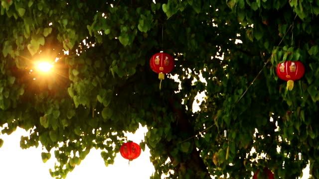 Lanterne cinesi su albero con raggio di sole
