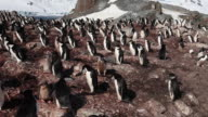Chinstrap penguin (Pygoscelis antarcticus) colony, pan left, Antarctica