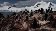 Chinstrap penguin (Pygoscelis antarcticus) colony, pan right, Antarctica