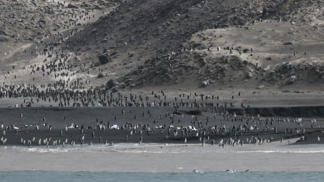 Chinstrap Penguins on Baily Head Beach, Deception Island