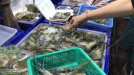 Choosing raw seafood for dinner , Pattaya , Thailand.